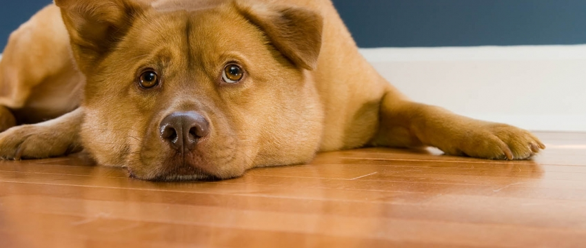 Wide Plank Flooring for Pet Lovers – Styles & Tips