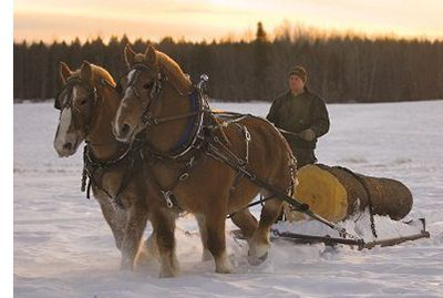 A team of horses dragging a log through the snow