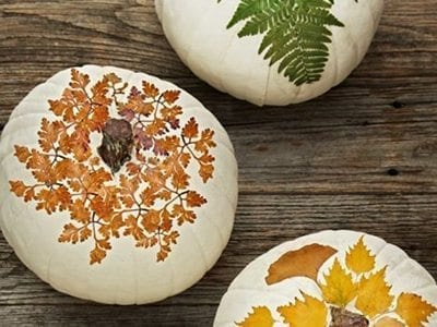 Painted Pumpkins for Fall Decor