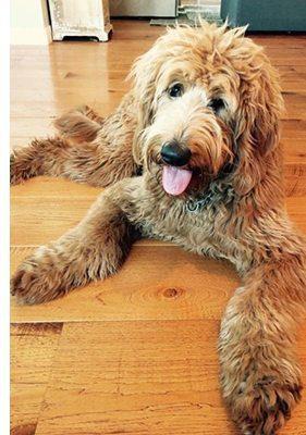a dog on hardwood flooring