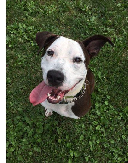 A Happy #PetsOnPlanks Rebound Hounds FosterDog
