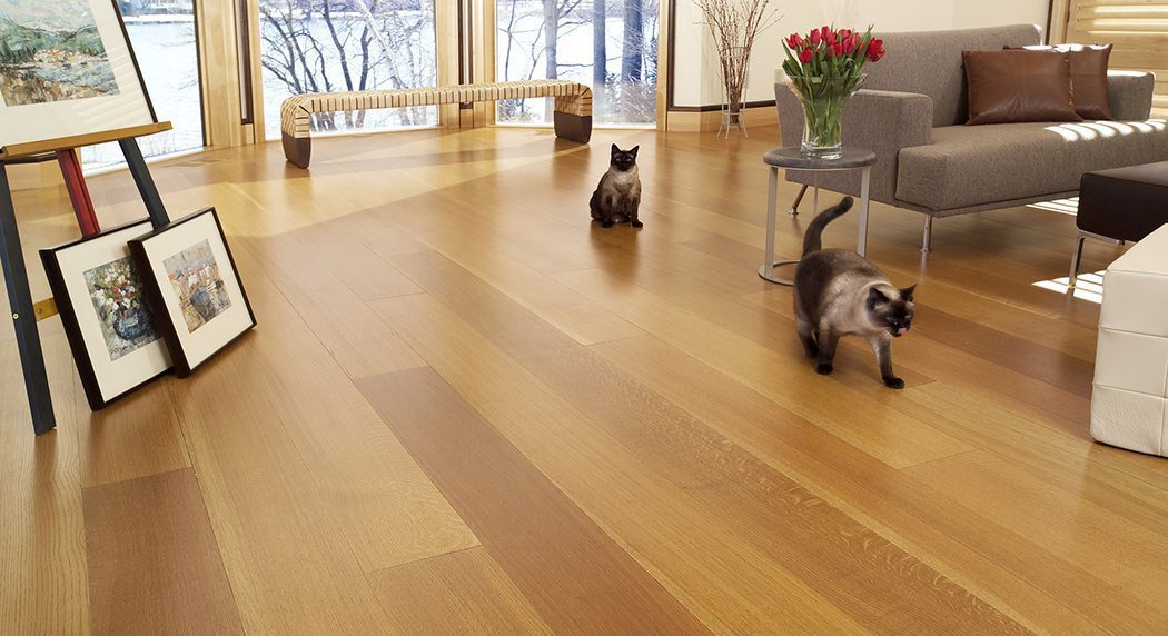 Siamese cats on a white oak hardwood floor