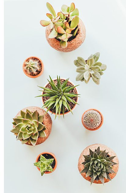 An assortment of planted succulents on a neutral background