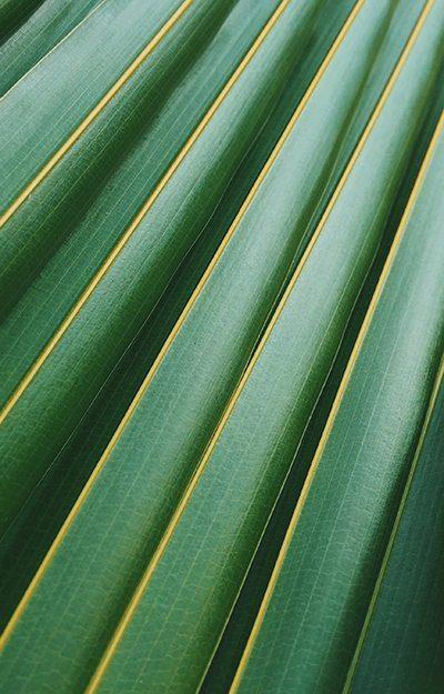 Close up of fern